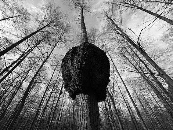 Ein besonderer Baum